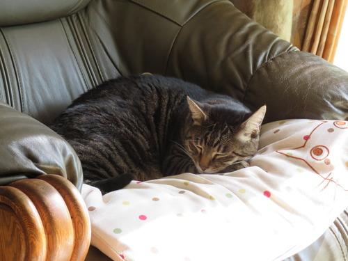 一人用ソファーで