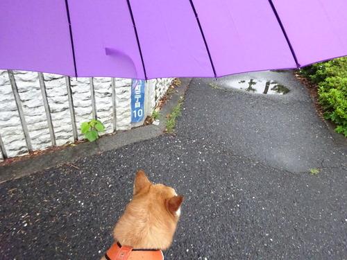 あいあい傘で