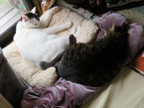"""窓辺で寝ていた""""たくみ""""に"""