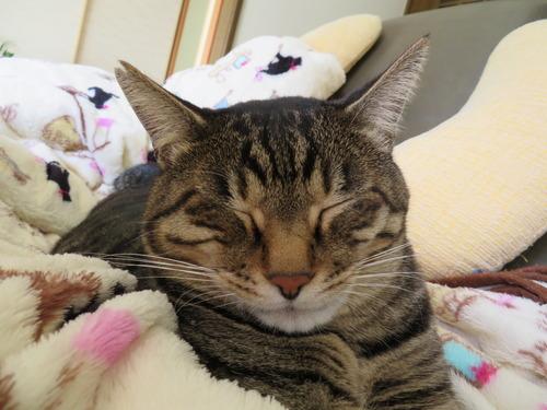 こんなお顔で寝ています