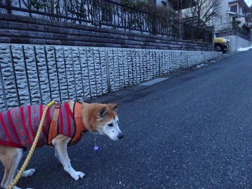 短い散歩終了です