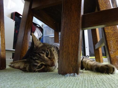 リビングのテーブル下