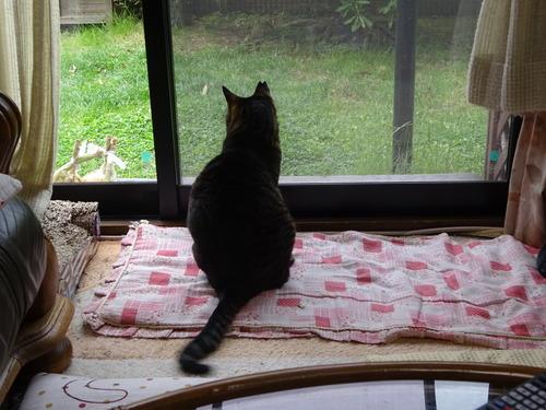 窓辺でマッタリ