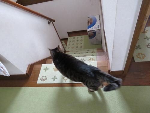 一緒に一階へ