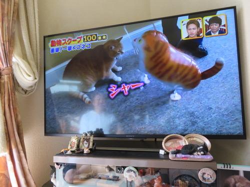 録画のTV