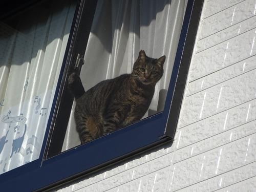 2階の道路側の窓辺