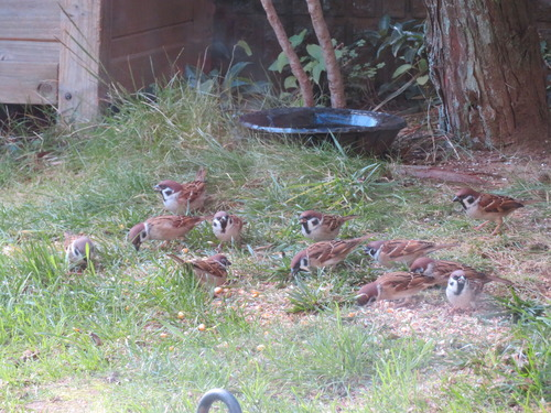 雀の団体さん