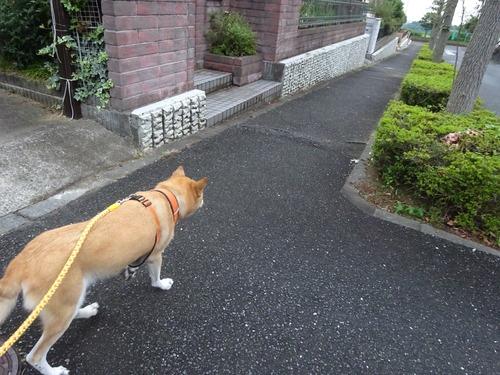 ゆっくり歩いて