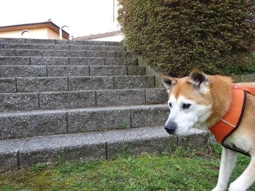 階段頑張って