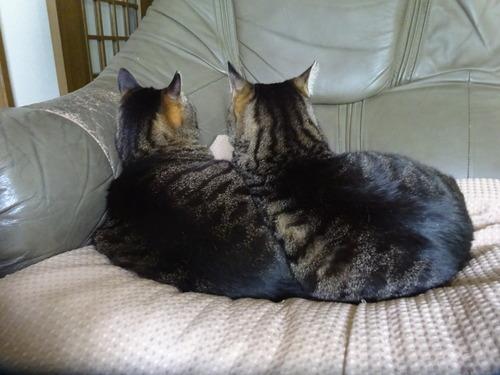 """2人用ソファーで寝ていた""""たくみ""""の元へ"""