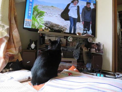 TVを見つめる