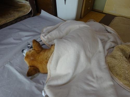 毛布をかけてグースーピー