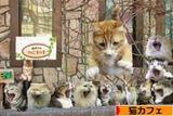 猫カフェブログランキング