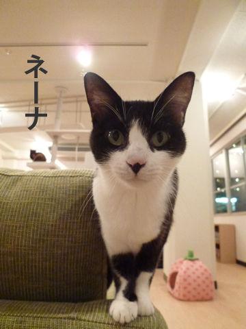 猫式ブログ-ネーナ