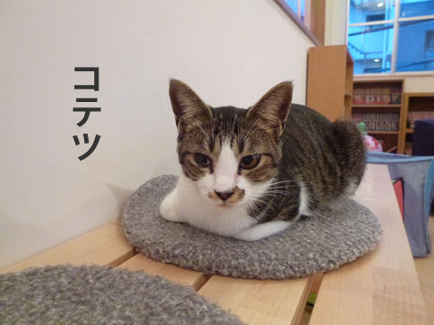 猫式ブログ-コテツ