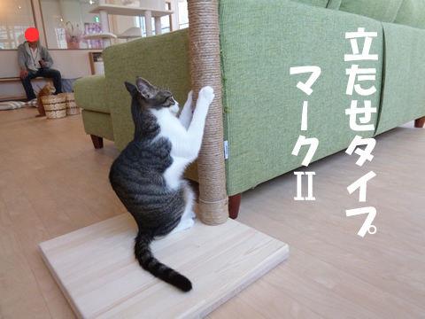 猫式ブログ