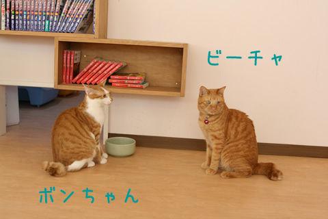 猫式ブログ~里親募集型猫カフェ