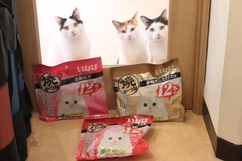 IMG_2295_masuoさん