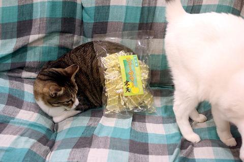 ネーナの枕さん