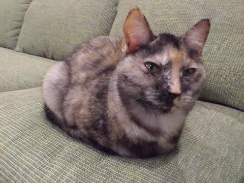 猫式ブログ-ザビ