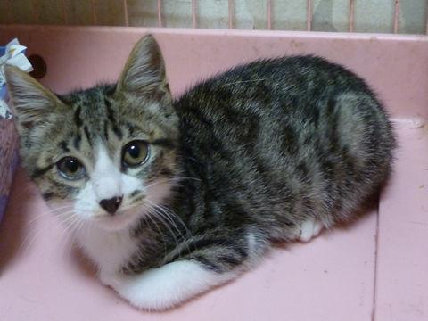 cat_14900_1