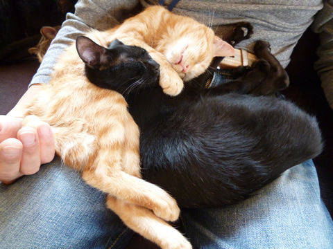猫式ブログ-ビーチャとスー