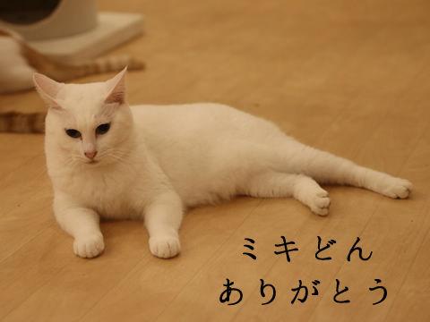 ■IMG_1958_r1_c2