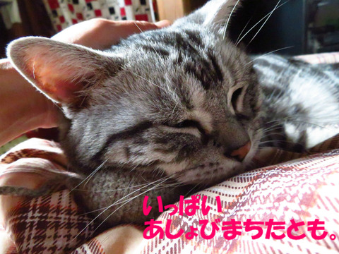 眠い・・・。