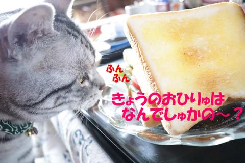 何、食べう?