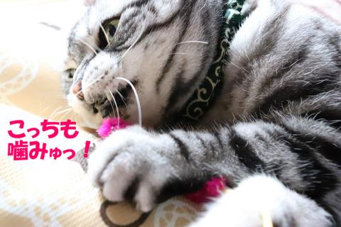 エモノ~♪