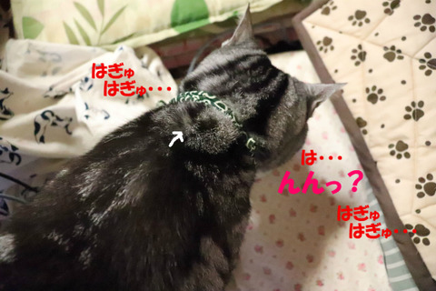 ( ,,`・ω・´)ンンン?