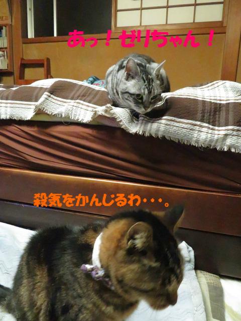 ゼリちゃんがいりゅ!