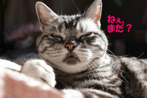 おなかすきまちた。