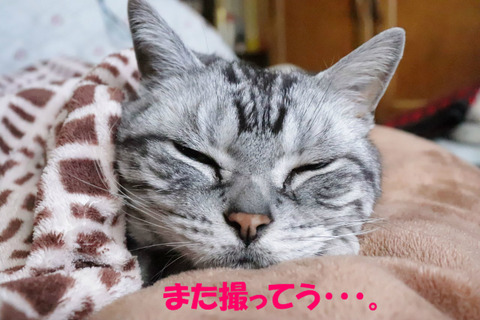 寝うけど。
