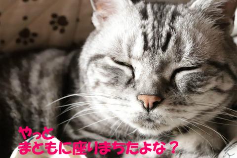眠いでしゅが。