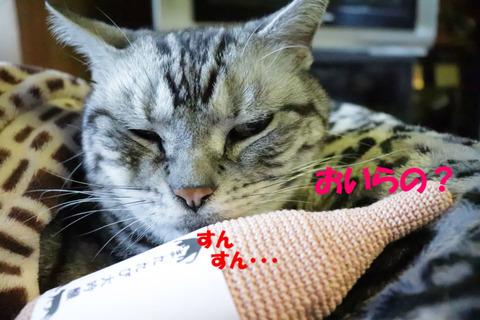 眠いんでしゅがなぁ。