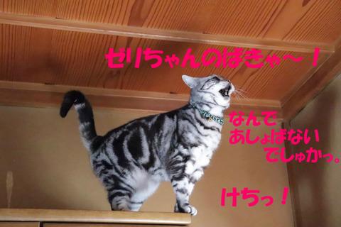 ゼリちゃんのけち~!