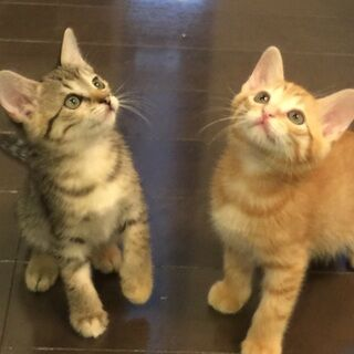 【画像】茶トラ猫たち