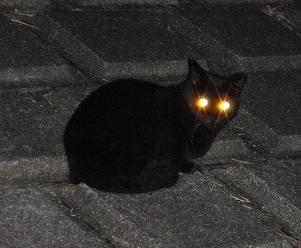 目が光る猫
