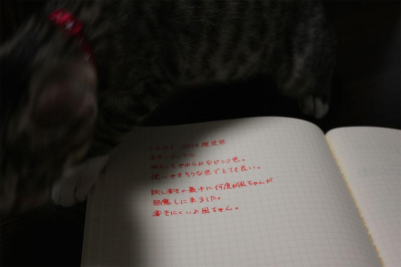IMG_7846.jpg