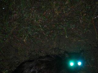 黒猫ノラ猫さん
