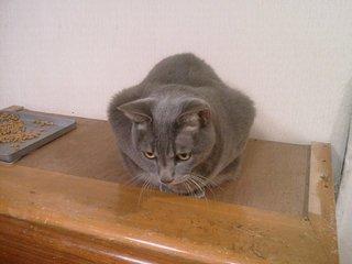 たんすの上の猫スフィンクス