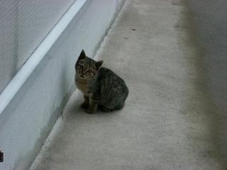 子猫(ネコ)