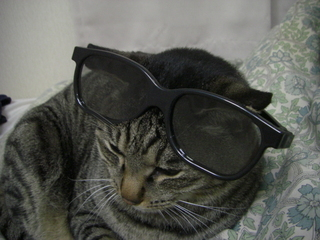 猫とサングラス