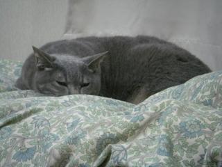 猫の眠り姿