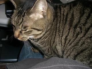 ひざの上の猫1