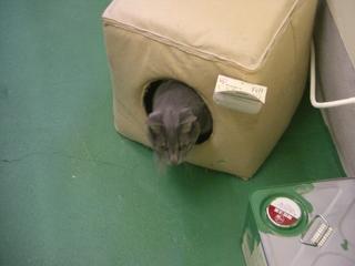 猫用キャットキューブ