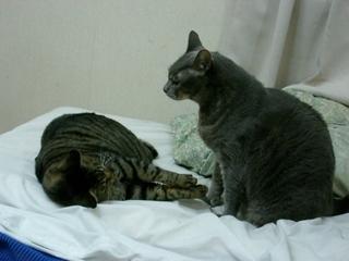 眠り猫と覚醒ネコ
