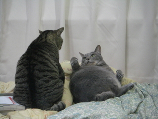 デカネコとちび猫