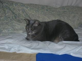 猫(ネコ)とベッド